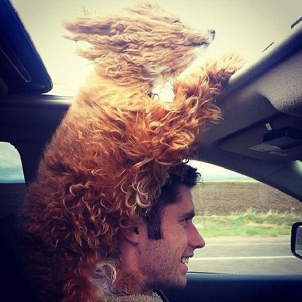 Cachorro no teto solar