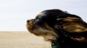 Cão e o vento