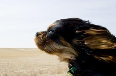 17+ engraçados cães que amam andar de carro mais do que tudo!