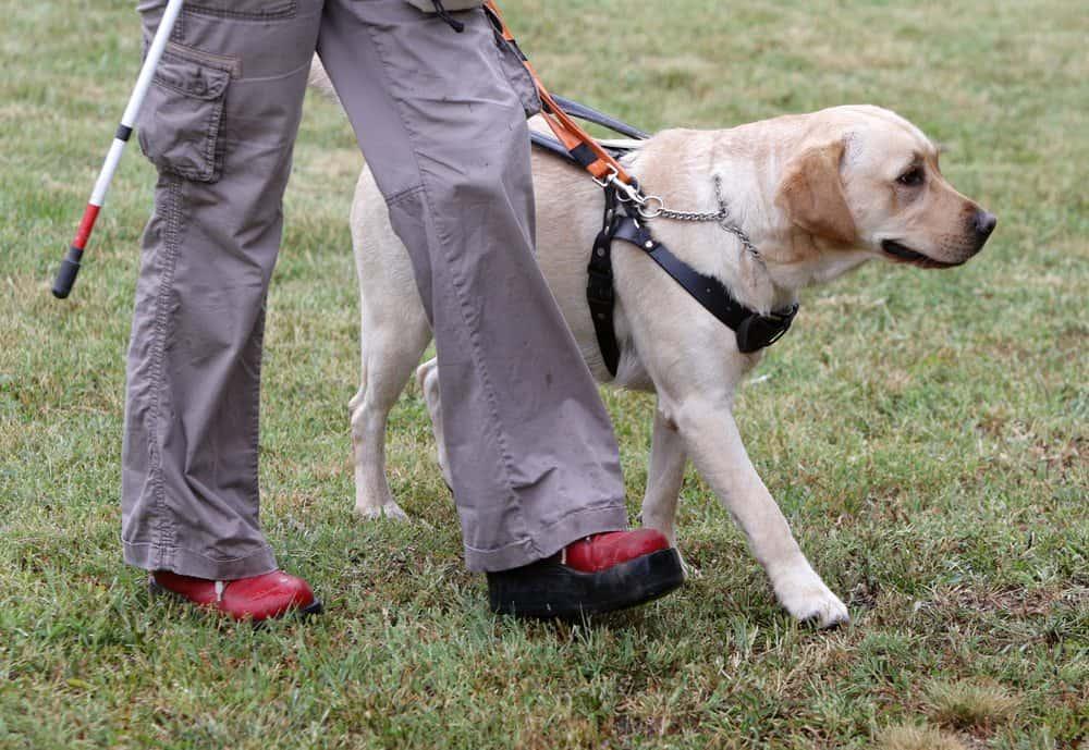 transporte de animal de estimação cão guia