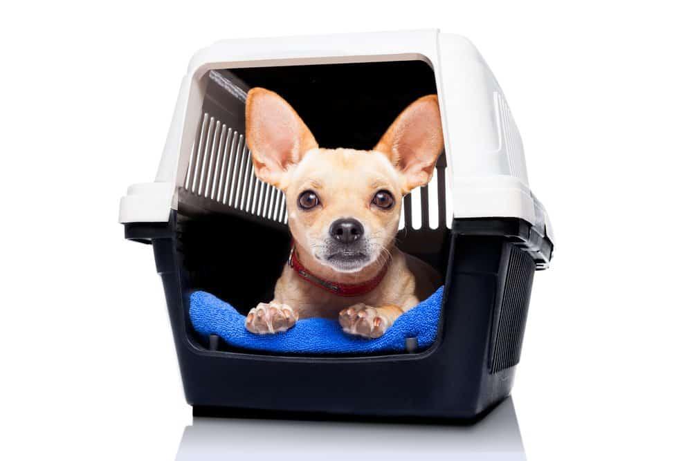 transporte de animal de estimação casinha