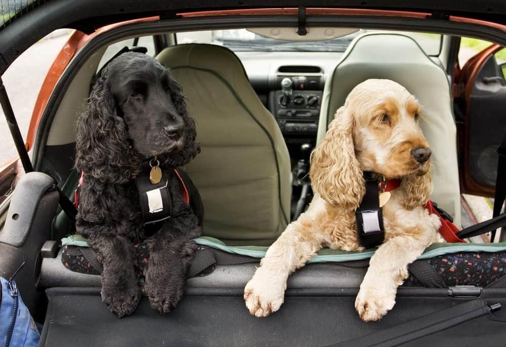 transporte de animal de estimação banco de tras