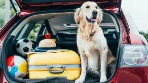 como transportar cachorro em viagem passo a passo capa