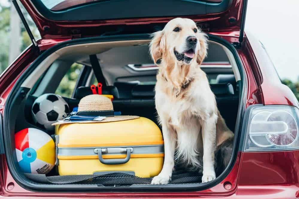 como transportar cachorro em viagem passo a passo